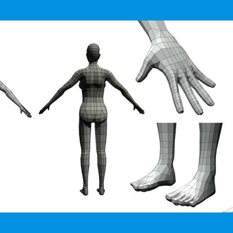 Anatomy Study - Wireframe